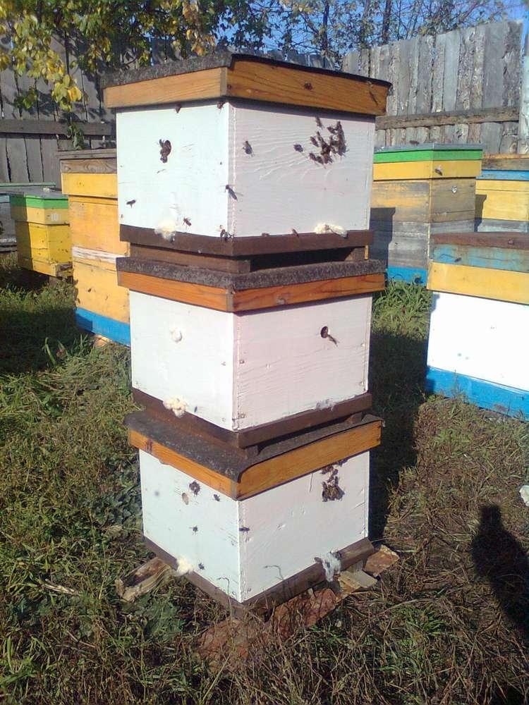 Как сделать нуклеус пчел 913